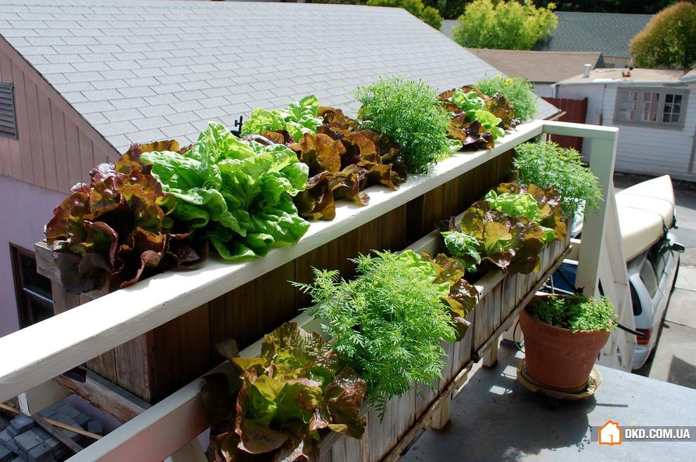 Vegetables on the balcony - creating a raised bed garden int.